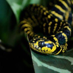 Ferme aux Serpents